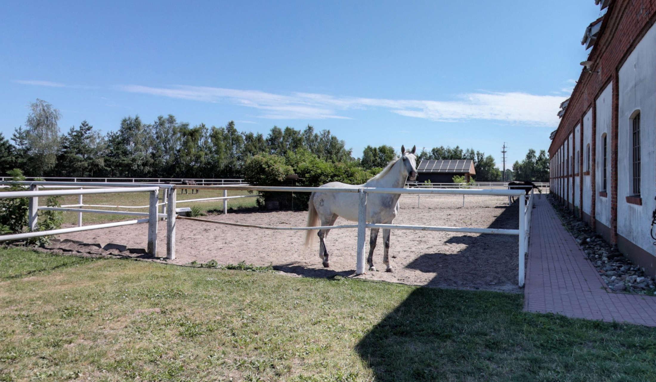 pleszew szkółka jeździecka